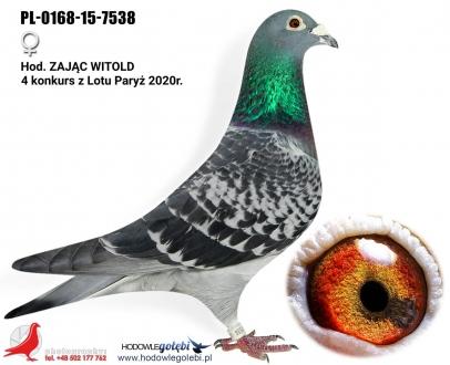 GOL_D14707-A72F86-CDA5E9-D7A769-7CAD10-621411.jpg