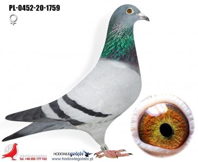 GOL_D239D4-F7F030-FDA49D-4F0BF2-F3FFD7-5B6982.jpg