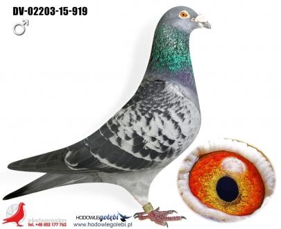 GOL_D5F966-35928F-C6DF4D-D66054-54C888-C5F291.jpg