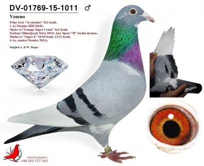 GOL_D713B7-2DF736-47ECA9-8920E0-DCDAAE-2EAF43.jpg
