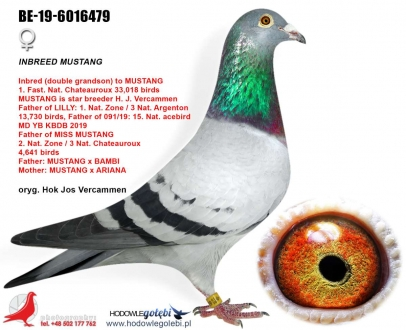 GOL_D7E8F7-E2B6F8-5C9226-CB6D4D-F54B4D-184F94.jpg