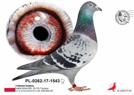 GOL_D8003D-9D98DE-824D55-E68850-AB65D3-B76599.jpg