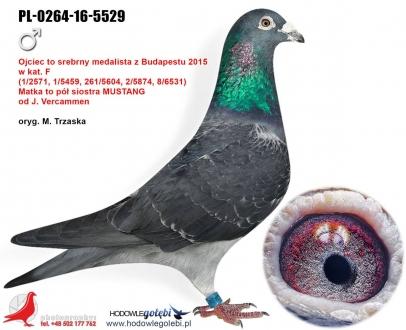 GOL_D93C90-9BF569-1DE9A0-867636-57F977-4C2B25.jpg