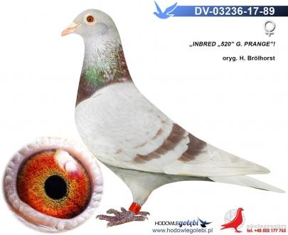 GOL_D999CC-B170CA-B105F8-AC6E72-B575DF-603DFB.jpg