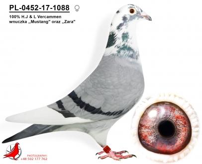 GOL_D9C1E7-3A415F-E1C358-394DDE-272D93-BC40DF.jpg