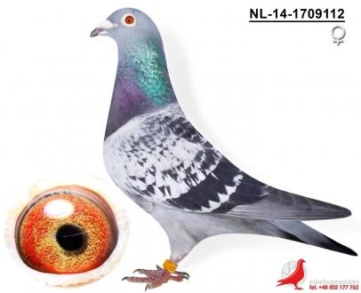 GOL_DA68F3-145847-3E2671-55EA76-E618E6-88AADB.jpg