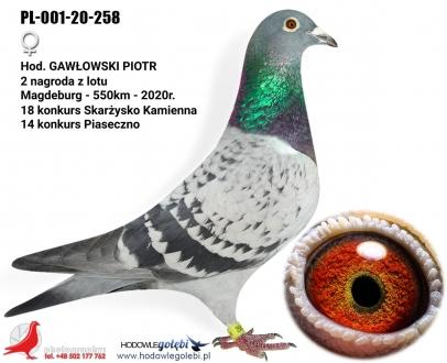 GOL_DAE3A7-75DBB1-0E6337-A86EA7-910EBD-32DDE0.jpg