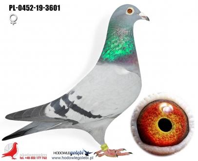 GOL_DB2744-07DA07-F59600-D402E8-DCC170-FAFA36.jpg