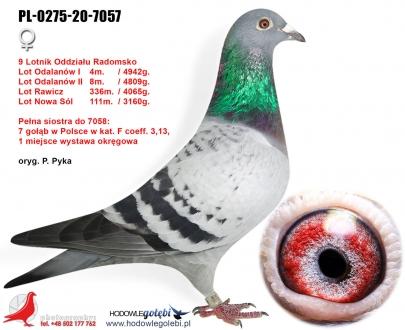 GOL_DBB9C7-3BEE4F-6C271E-840FFE-5890A4-793DC0.jpg