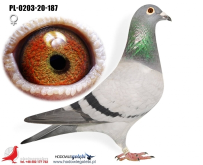 GOL_DC2CB6-23CC88-94EB9C-5C1578-F115DE-D1A42E.jpg