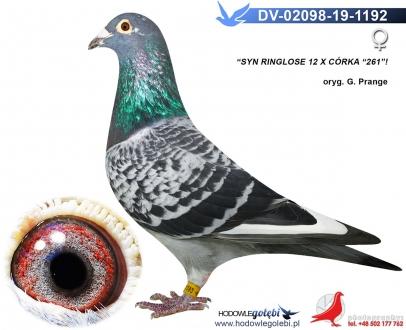 GOL_DC9509-B6E2AE-9C3B8E-E2FBA4-F4AAF4-BDBD13.jpg