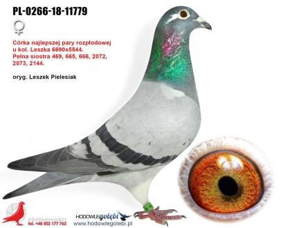 GOL_DCF8BD-48173E-D4BF7C-49C043-1959C5-D8A293.jpg