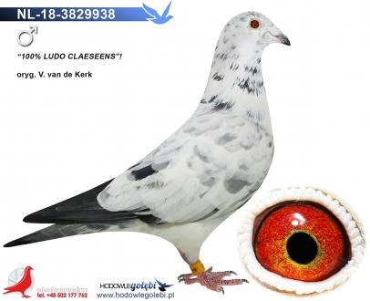 GOL_E1FE49-D50F58-56148B-88204B-9AB137-E8A57B.jpg