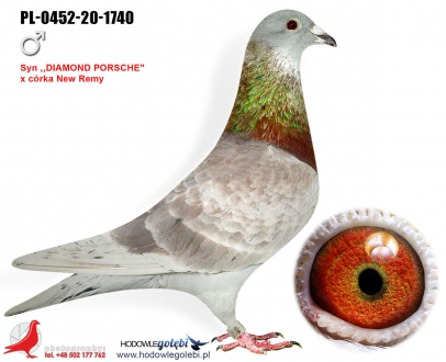 GOL_E3E5C4-35B409-3C3FCB-F718D3-546777-16C371.jpg