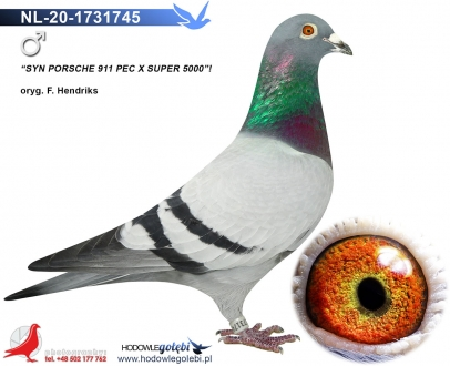 GOL_E6057A-29CB81-D0F189-C333F7-A1C405-AAF0AE.jpg