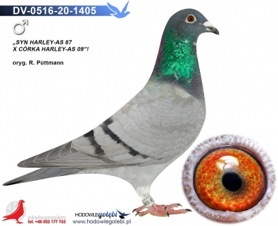 GOL_E63984-C1359B-744C52-E1F16F-267816-CBC038.jpg