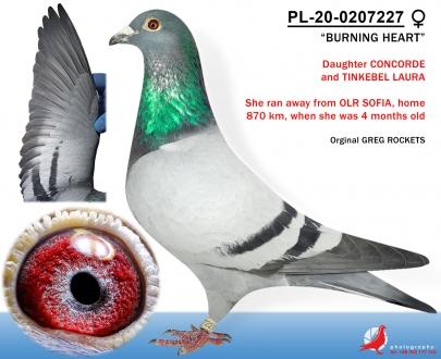 GOL_E6EDFA-99B7AA-627573-53514C-E4B780-02B784.jpg