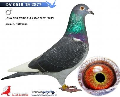 GOL_E76989-0E17E6-37D9D8-DA9122-E9C694-06F4CE.jpg