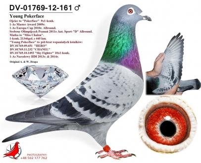 GOL_E78420-345197-A6A596-AF7EF4-CC4B90-8E6B3F.jpg