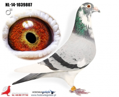 GOL_E7A078-1625F0-9651B0-B2711B-5A654F-0F5AC6.jpg