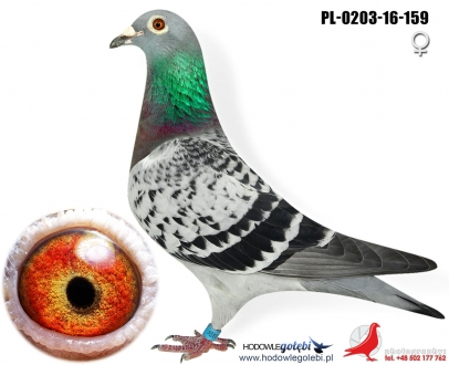 GOL_E835E7-A8F7D3-41FF9C-ACB9C4-931869-A6AB93.jpg