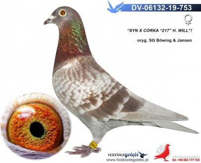 GOL_E9AAD5-00C1FB-A16F34-BA7100-5E9AB6-E55CF3.jpg