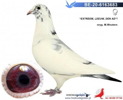 GOL_EB3D3E-EAD8BF-5A73E6-C2454A-58EC1D-610D0E.jpg
