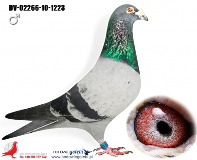 GOL_EDB701-140985-087929-FB7C8E-4B66D8-68D36B.jpg