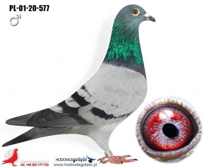 GOL_EDDCEB-8515BB-BE91E7-D99214-138CA5-55A8A5.jpg