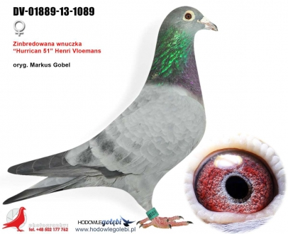 GOL_EE8C0F-540EC8-488E73-A1B51D-71F96E-7ABC83.jpg