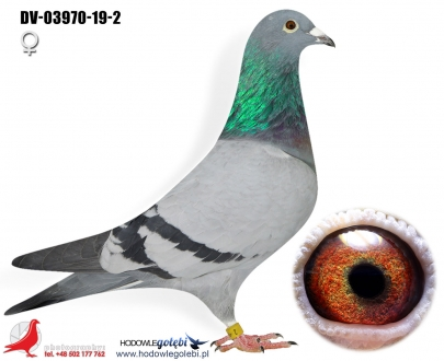 GOL_F0979B-7CAB00-A43366-B25384-0E0AC0-DA633D.jpg