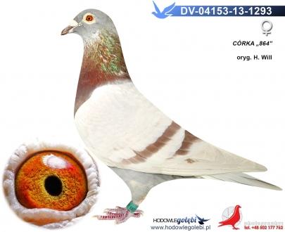 GOL_F2E733-DF3FD0-839306-A7A5F3-1A7E50-DA92DD.jpg