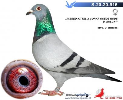 GOL_F4CE4E-3EEF29-9A4959-F94559-BB5C00-9D3340.jpg