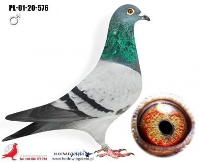 GOL_F4E460-471DAB-793438-14BA90-B0A7E5-140310.jpg