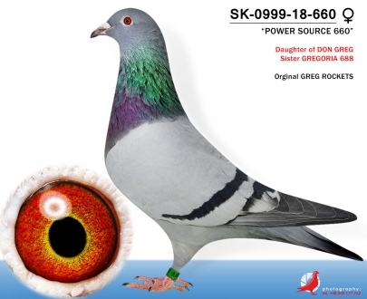 GOL_F5595F-C34DB3-CDFB3B-87550C-E6160F-FF6F12.jpg