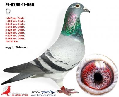 GOL_F569A6-0CC782-B0117C-21241C-17C4ED-3DCEDB.jpg