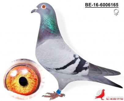 GOL_F67713-9A1E16-C9E39E-1AB6BE-7B44F9-BA2662.jpg