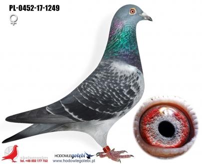 GOL_F73725-3CAF3D-4FD5E2-5945C4-A857E0-4B36CC.jpg