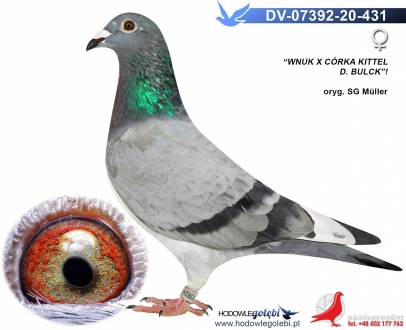 GOL_F86995-82A98A-CFA21D-B8F9A4-96D87F-07155D.jpg