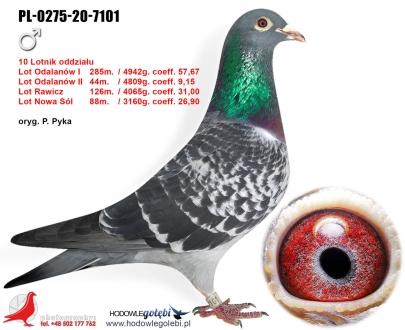 GOL_F977A4-18D878-9569E8-1EFE1F-722FB9-0E01EE.jpg
