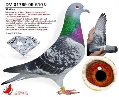 GOL_FDE89F-1864EC-4F542D-F404B7-EBF507-A6C85A.jpg