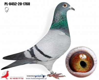 GOL_FF582F-02A8EC-75E043-8E9830-9CE0F3-162BFC.jpg