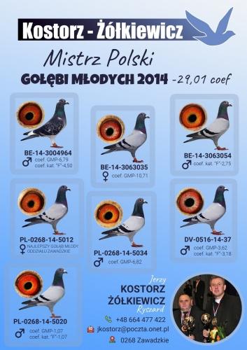 mistrz-polski-golebi-mlodych.jpg